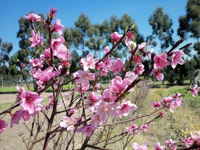 Uno dei fiori più belli da apprezzare all'inizio della primavera.          Già alla fine di agosto