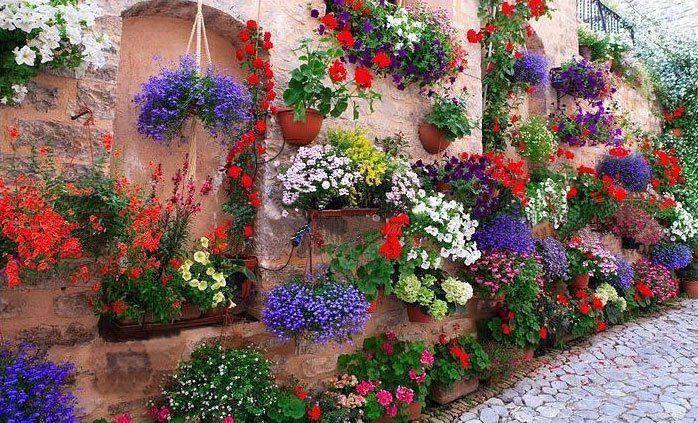 Plantas y jardines de uruguay for Aprender jardineria