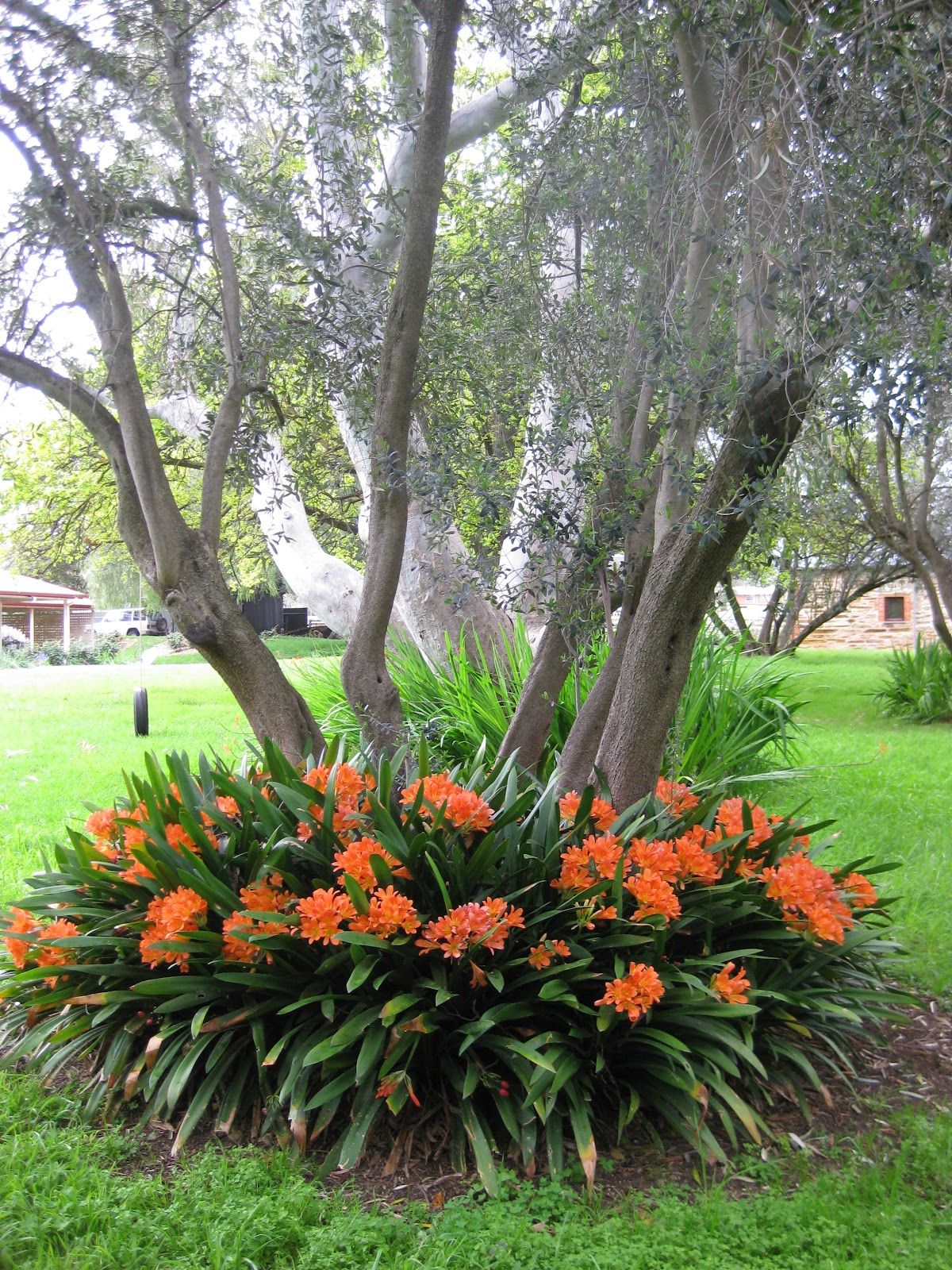 Plantas y jardines de uruguay for Canteros de jardin